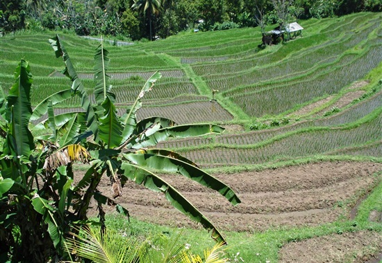 Na skok na Bali a Lombok - Bali