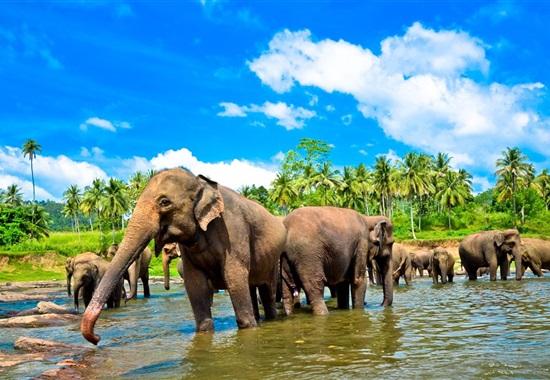 To nejlepší ze Srí Lanky s CZ průvodcem -